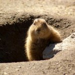 How To End Your Groundhog Day Job